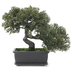 Europalms Bonsai, 21cm